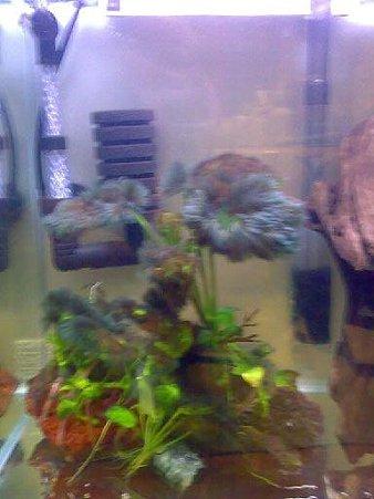 黒ヒゲのついた水草