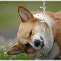 Photos: 水飲みずら~い