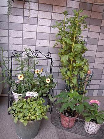 玄関横のお花