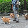 Photos: 09,07,22ワンコ3ひき