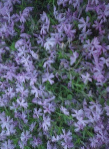 紫の花だらけ