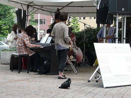 ハシブトガラスの巣立ち雛〜かわいいオーディエンス(ジャズ・プロムナード・イン・仙台)