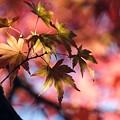 Photos: 穏やかな光と紅葉-E