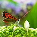 写真: オマエが咲くまで待ってやる