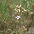 Photos: flower05252011dp2-02