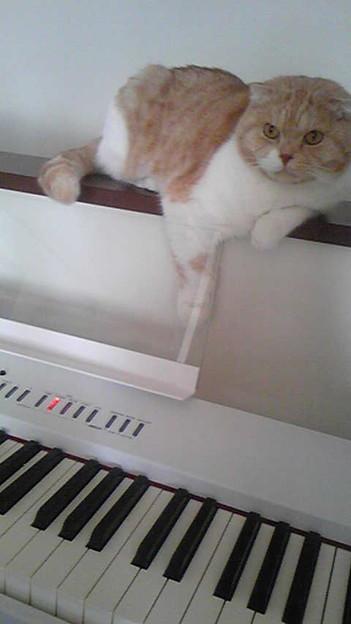 午後はこのピアノと戯れるの...