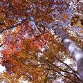 会津駒ヶ岳の紅葉3_644