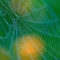 Photos: 綺麗な蜘蛛の巣2
