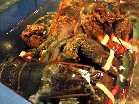ロブスターの群@Red Lobster