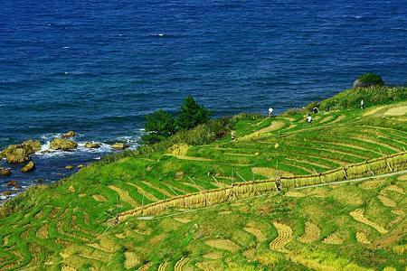 日本海と千枚田 農作業の人