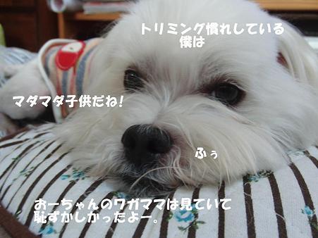 CIMG7695111