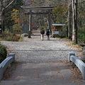 戸隠神社奥社参道