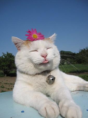 超级可爱的大头猫咪超强写真集 [65p]