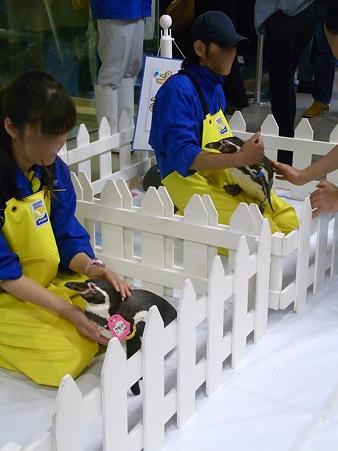 20120506 宮島 ふれあいタイム01