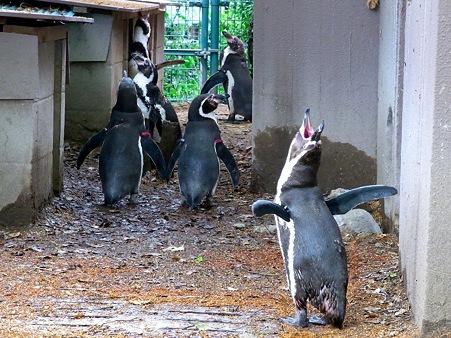 20110522 天王寺 路地裏ペンギン03