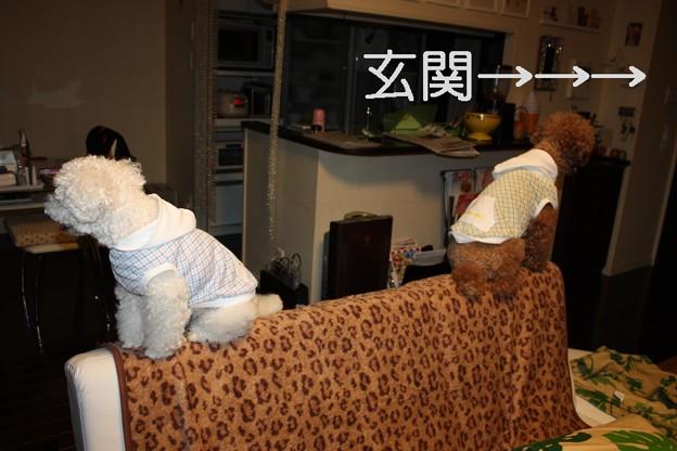 Photos: ソファの上で・・・1