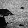 Photos: 3370_きらめく水面
