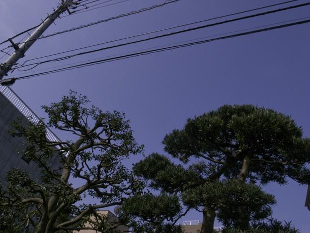 写真: 2009-08-20の空1