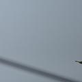 写真: 今日も元気で飛んでいますっ!