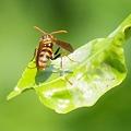 写真: ハチの日常