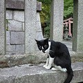 写真: gosyoneko2