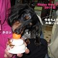 写真: senna0715_2011newyear