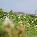 写真: 20090523_134116