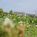 Photos: 20090523_134116
