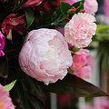 Photos: 20090530_172140