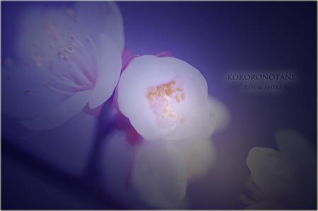 花だより・・・。