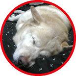 雑種犬カート