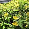 Photos: パドック横の花