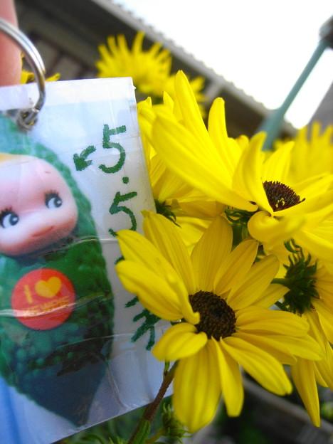 柳葉ひまわりの花1