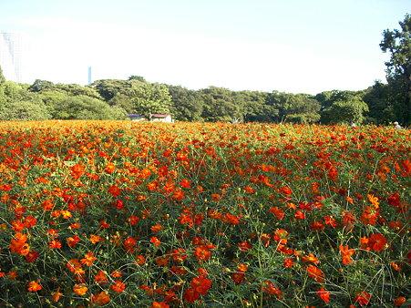 浜離宮の花畑