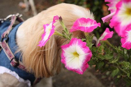 お花とくるみ3