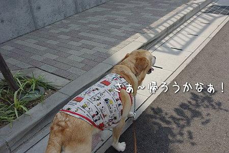 s-myu2009_0626(010)