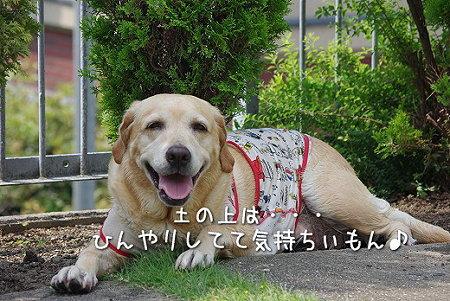 s-myu2009_0626(019)