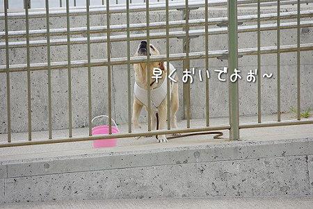 s-myu2009_0718(017)
