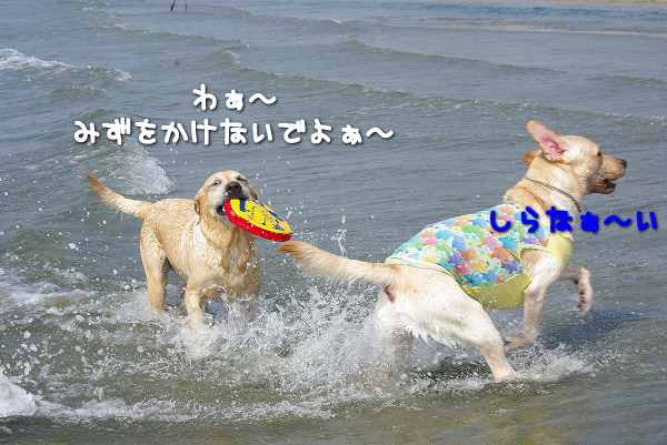 s-myu2009_0829(076)