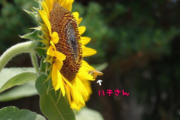 s-myu2009_0906(030)