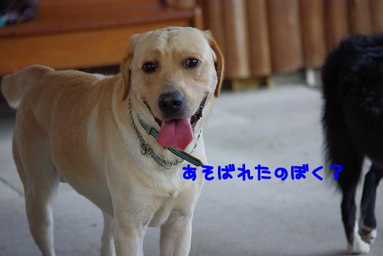 s-myu2009_0927(190)