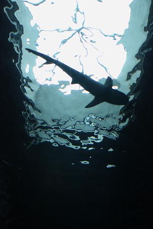 危ない魚影