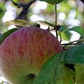 Apple 9-26-09