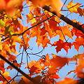 Photos: Orange 10-17-09