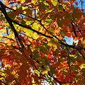 Photos: Orange, Yellow and Blue