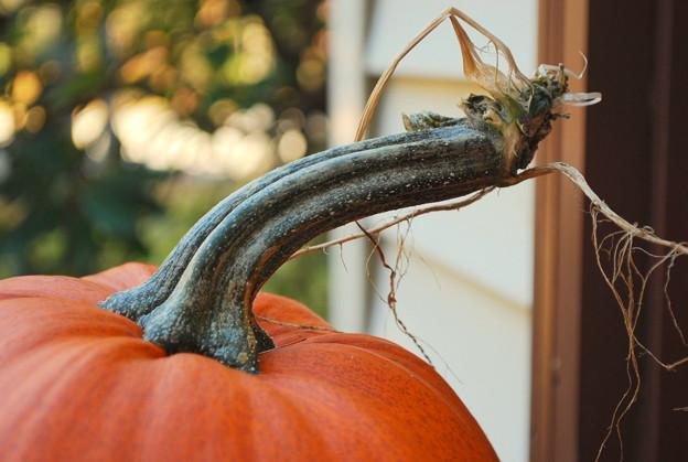 MyPumpkin 10-25-09