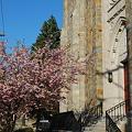 写真: The Church and the Cherry