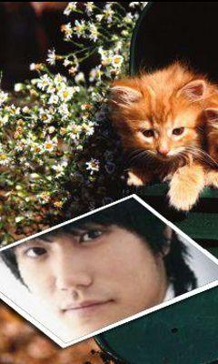 松山ケンイチ 子猫とケン