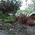 Photos: 嵐の後の庭
