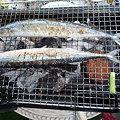 Photos: Niceな焼き色の秋刀魚さん